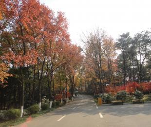 """""""冬之韵""""——最美植物园"""