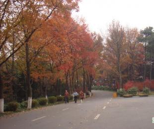 彩叶缤纷舞 醉美植物园