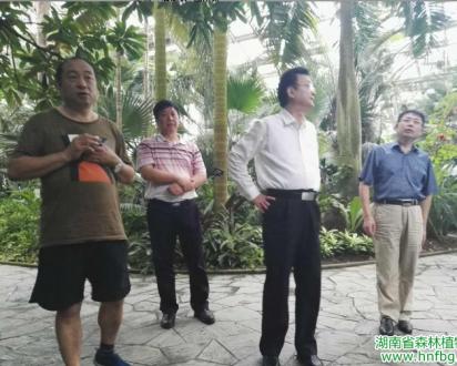 彭春良书记陪同邓三龙厅长调研上海植物园